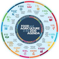 From Farm to Fork: SDG 12 & SDG 13 in the Food Industry+Image